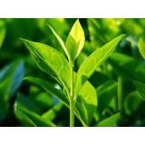 Tea tree (Org)   有機茶樹